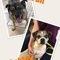 Adopt A Pet :: Oakley - Middletown, NY