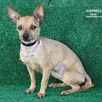 Adopt A Pet :: *MADDIE - Hanford, CA