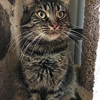 Adopt A Pet :: Luna - Devon, PA