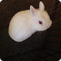 Adopt A Pet :: Wynter - Maple Shade, NJ
