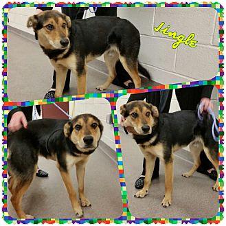 Shepherd (Unknown Type) Mix Dog for adoption in Louisburg, North Carolina - Jingle