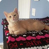 Adopt A Pet :: Moko - McDonough, GA