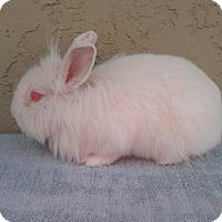 Adopt A Pet :: Frosty - Bonita, CA