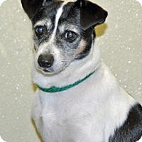 Adopt A Pet :: Spencer - Port Washington, NY