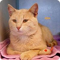 Adopt A Pet :: Ajax - Oskaloosa, IA