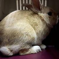 Adopt A Pet :: Ford - Edmonton, AB