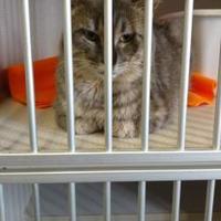 Adopt A Pet :: DASH - Graham, TX