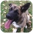 Photo 1 - Bernese Mountain Dog/German Shepherd Dog Mix Puppy for adoption in Powell, Ohio - Cassie
