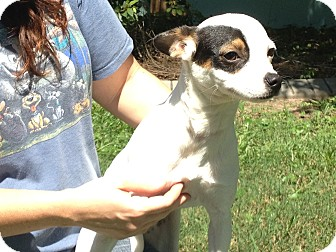Terrier (Unknown Type, Small) Mix Dog for adoption in Montrose, Alabama - Nettle
