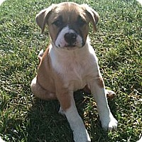 Adopt A Pet :: Colbi (One of Molly's Pups) - Sacramento, CA