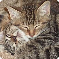Adopt A Pet :: Arabella - Stanford, CA