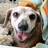 Adopt A Pet :: Verona - Weston, FL
