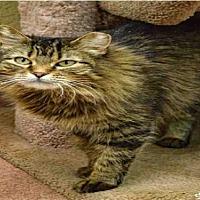 Adopt A Pet :: BRISHA - Ogden, UT