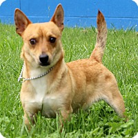 Adopt A Pet :: Kota - Waldorf, MD