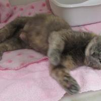 Adopt A Pet :: Wilhelmina - Ridgely, MD