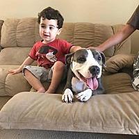 Adopt A Pet :: Leani - Tampa, FL