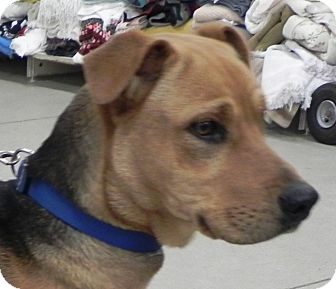 Retriever (Unknown Type) Mix Dog for adoption in Buffalo, Wyoming - Jordan