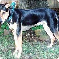Adopt A Pet :: Chester - Kingwood, TX