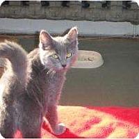Adopt A Pet :: Sky - Montreal, QC