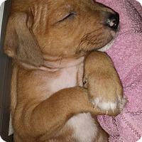Adopt A Pet :: Baby Mars - Marlton, NJ