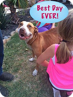 Pit Bull Terrier Mix Dog for adoption in Brentwood, California - Happy