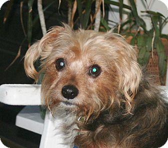 Terrier (Unknown Type, Medium) Mix Dog for adoption in Umatilla, Florida - Mylo