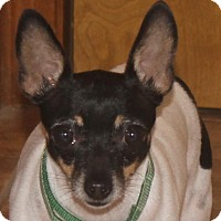 Adopt A Pet :: Tiny - North Olmsted, OH