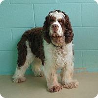 Adopt A Pet :: YoYo -Adopted! - Kannapolis, NC