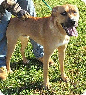 Hound (Unknown Type)/Terrier (Unknown Type, Medium) Mix Dog for adoption in Reeds Spring, Missouri - Banjo
