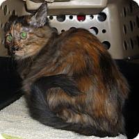 Adopt A Pet :: Bailey - Dallas, TX