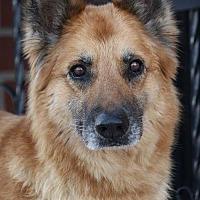 Adopt A Pet :: Dandelion von Drei - Los Angeles, CA