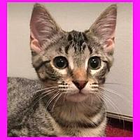 Adopt A Pet :: Mango - Mt. Clemens, MI