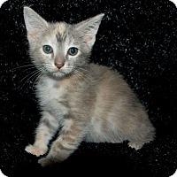 Adopt A Pet :: Frost - Salamanca, NY