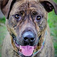 Adopt A Pet :: Rocky - Flint, MI