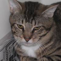 Adopt A Pet :: Jonathan - Robinson, IL