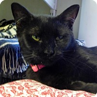 Adopt A Pet :: Mystique - Winston-Salem, NC