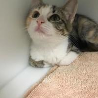 Adopt A Pet :: Sheeba - Cleveland, OH