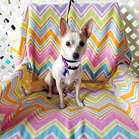 Adopt A Pet :: Mirabel - Houston, TX