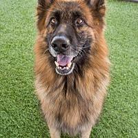Adopt A Pet :: Magnum - Phoenix, AZ