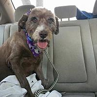 Adopt A Pet :: Tasmania - Houston, TX