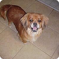Adopt A Pet :: AUDREY - Cathedral City, CA