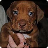 Adopt A Pet :: Dash - Orlando, FL