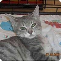 Adopt A Pet :: Rosemary - Riverside, RI