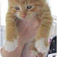 Adopt A Pet :: Nuke - Warren, MI