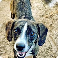 Adopt A Pet :: Jazzy - Fort Valley, GA