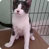 Adopt A Pet :: Tommy - Modesto, CA