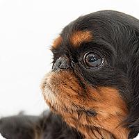 Adopt A Pet :: Vesta - Cumberland, MD