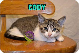 Domestic Shorthair Kitten for adoption in Trevose, Pennsylvania - Cody