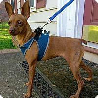 Adopt A Pet :: Hazel - Lawrenceville, GA