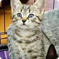 Adopt A Pet :: Brianna - River Edge, NJ